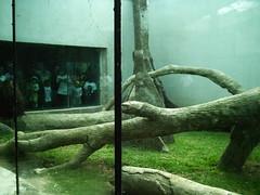 porque no quiero (lindas productions) Tags: zoo mira monos zoologico changos mirones voyerismo quemiramos