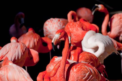 Pink Flamingo - 58:365