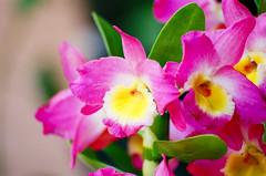 + Orquídeas... (Marcelo M P Mariano) Tags: flores macro minasgerais foto sp e clube nikonf80 fotoclube suldeminas fisp fujicolorprovalue200 afsvrzoomnikkor70300mmf4556gifed itajubámg wwwmarcelompmarianocombr