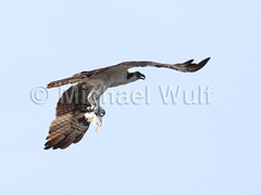 Wulf_Birds_04_07 (MikeWulf) Tags: birds michael florida wulf