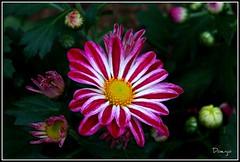 Un poco de color.... (Doenjo) Tags: españa andalucía doenjo sevilla plazadeamérica flores jpa001