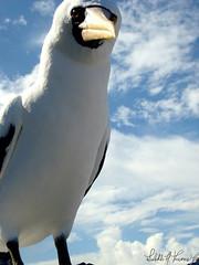 Simplemente observo... Y siento.. (Lisibeth) Tags: sky beach ecuador sony playa galapagos ave cielo mirada gaviota dscw130 ltroconis lisibethtroconis lisibeth