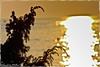 Tramonto dorato a Marina di Ugento, Puglia (william eos) Tags: desktop city trip travel camping light sunset sea summer vacation italy holiday art tourism water colors canon landscape geotagged golden photo europa europe italia tramonto mare william giallo wallpapers fotografia acqua turismo colori 2009 viaggio salento puglia vacanze città oro sfondo tema campeggio photografy viaggiare photocard nicepictures bellefoto nicepicture rivadiugento marinadiugento canoneos450d ef135mmf28withsoftfocus williamp sfondiperdesktop williameos williamprandi