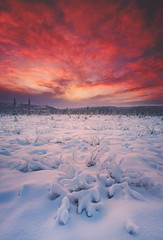 Fresh Snow (Wolfhorn) Tags: winter sunset snow cold nature alaska landscape fallen wilderness freshly specialpicture