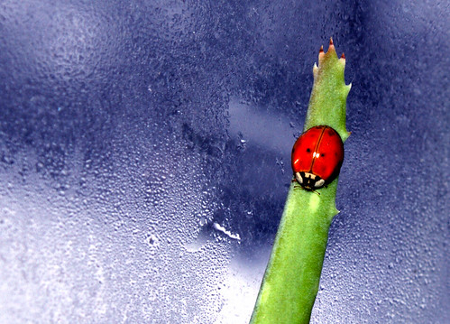 Ladybug Messages of Wisdom