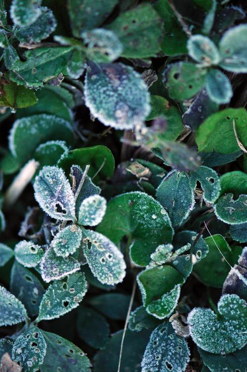 web_frost_dark_0123_2431