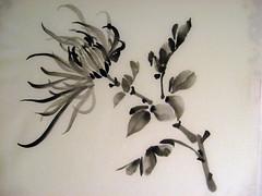 Drying Chrysanthemum