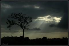 Somethings are Blessed to be on TOP and hold the ground against gushing wind ! (Samyak (www.samyakkaninde.com)) Tags: morning india black tree nature sunshine silhouette clouds dark wind windy andhra tamilnadu ctc pradesh canon400d venkatgiri adamsladder