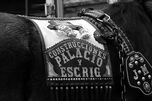 palacio-horse