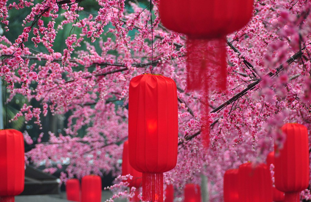 Red Lanterns and Cherry Blossoms