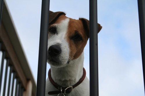Seamus: Dog Behind Bars