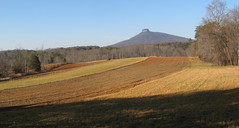 Farm field on Section 13