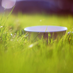 (Brittany Chavez) Tags: color green cup grass closeup oregon blurry purple bokeh mug coffeemug goodwill whitecup cuprim