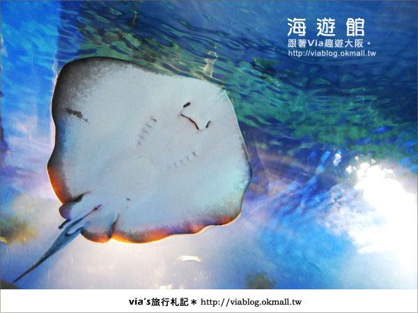 【via關西冬遊記】世界最大極的水族館~大阪海遊館7
