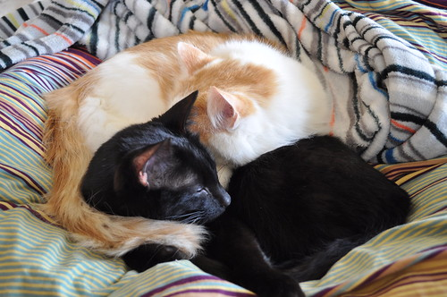 cute sleepy kittens snuggling napping cat pic
