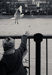 birds feeding (www.instagram.com/ahmed.habis/) Tags: street leica bw black bird london birds river children child feeding withe streetphotography best m m8 times todays photogrphy leicam