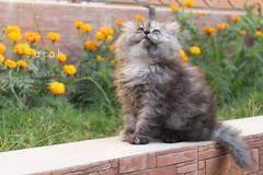 Lily ♥ ('13;* Sαruzқi ~♥ MissesPhotography<'3) Tags: canon lily gray noedit kiss3 kiiten