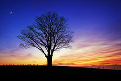 Vernal Equinox (Stuart Stevenson) Tags: blue red sky orange moon black tree nature silhouette clouds evening scotland spring high outdoor dusk hill naturallight viewpoint lonelytree crescentmoon vernalequinox whispy clydevalley colourfulsky tinymoon aftersundown fromtoday canon5dmkii thedaysgetlonger stuartstevenson 12hoursdaylight 12hoursdark