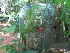 Forrester's Secret Garden Art & Parrots (Shoestring Weekends) Tags: keys florida keywest parrots floridakeys conch conchrepublic floridaattractions nancyforrester shoestringweekendscom forresterssecretgardenofartparrots budgetfriendlyvacation budgetfriendlyvacations