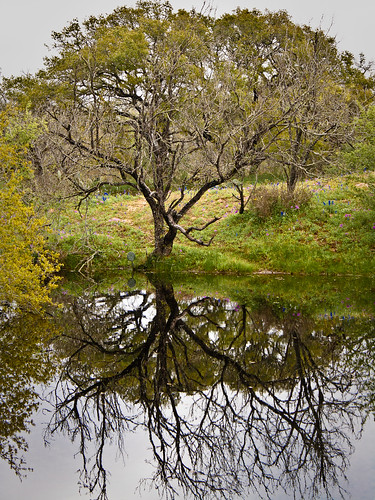 Reflections in a small lake - 291/265 - 27 March 2010