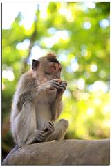 Happy Monkey Bokeh Wednesday (YYZDez) Tags: ocean travel sea bali forest indonesia island monkey java asia southeastasia dof bokeh indianocean ubud denpasar monkeytemple monkeyforest lessersundaislands tabanan hbw indonesianisland
