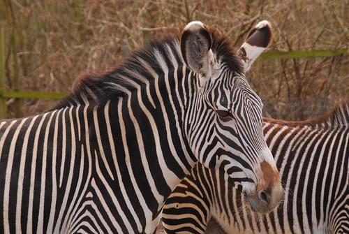 Zoo tur i påsken 2010
