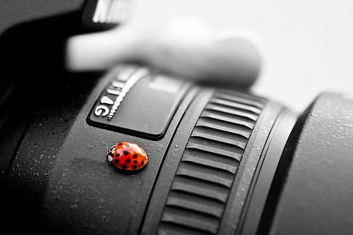Bug, Selective color