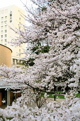 IMG_8276 (tohru_nishimura) Tags: japan canon tokyo cosina yotsuya sophia carlzeiss sophiauniversity planar5014 eos5d