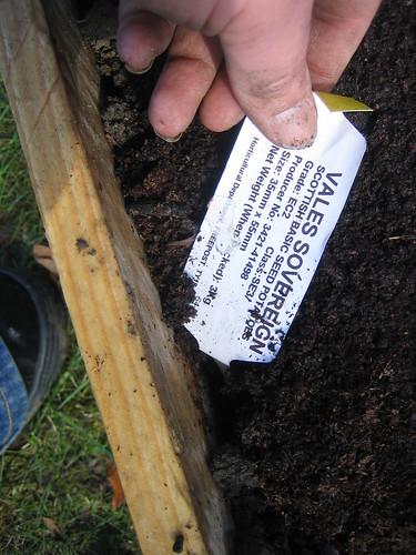gardening042010 049