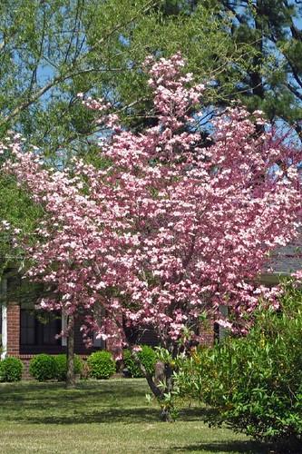 Spring In Mena