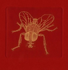 -- 001 (tim.spb) Tags: original fly etching postcard small ornament plates desigh    aquafortis