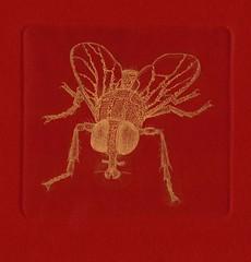 муха-золото-красный 001 (tim.spb) Tags: original fly etching postcard small ornament plates desigh открытки графика малые aquafortis формы офорт печатные