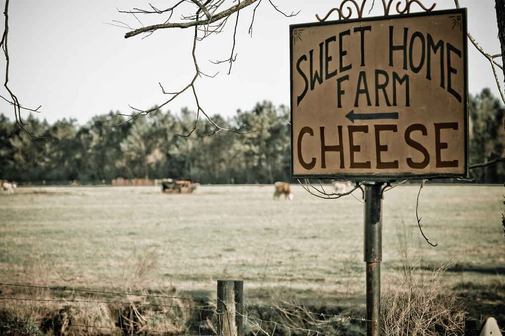 """Poets have been mysteriously silent on the subject of cheese."""