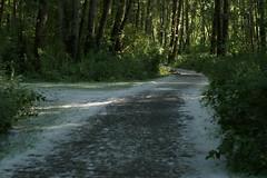 CottonwoodStorm
