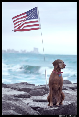 "The PAWtriotic Series - ""Sea to Shining Sea"" by staymor.com"