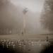 Birds in the Mist
