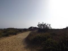 (<3 Revolution) Tags: realmonte agrigento sicilia beach spiaggia dune nature vegetazione