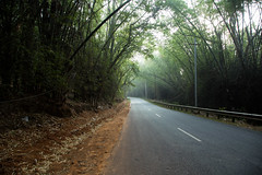 In to the green (Karthikeyan.chinna) Tags: karthikeyan chinna chinnathamby canon canon5d green nature travel woods road bamboo forest reserved bandipur mudumalai tamilnadu india ooty wild scenary