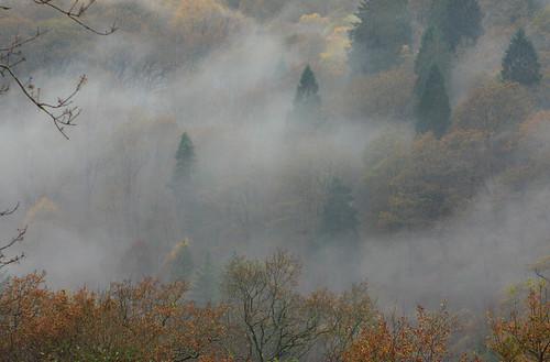 A misty moisty morning