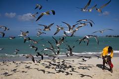 New contact, The Bahamas (Marie-Marthe Gagnon) Tags: ocean shadow sun beach water birds animal marie sand many marthe bahamas nassau cablebeach gagnon greatnature flickrchallengegroup flickrchallengewinner worldtrekker mpdquebec mariegagnon mariemarthegagnon mariemgagnon
