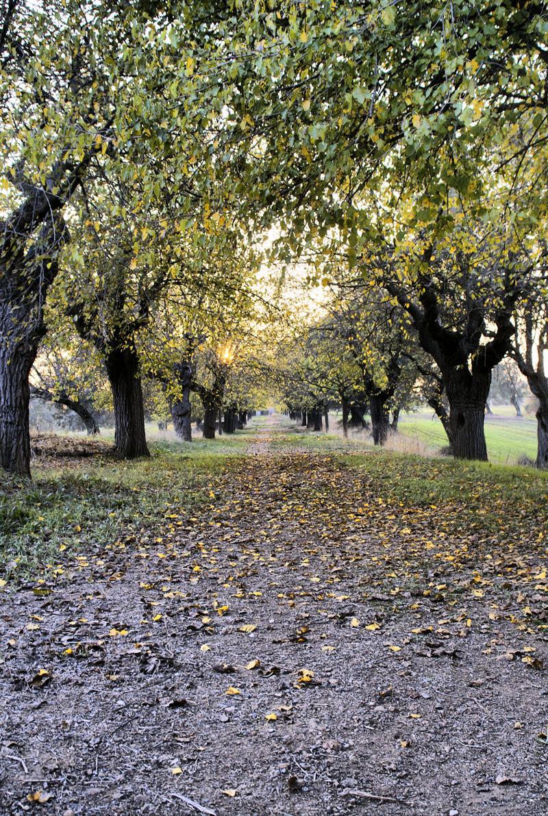 viale di villa York, roma
