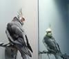 BirdHead: Mirror, Mirror...