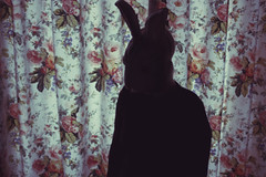 (_acido) Tags: morning flowers light rabbit me vintage grey secret curtains canoneos450d