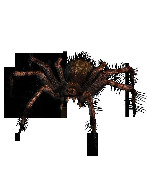 Render_Spider