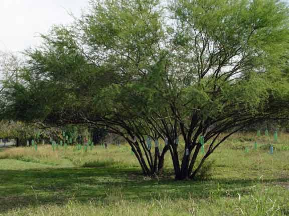 bottletree.jpg
