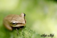 eye in green (AvijitNandy) Tags: macro