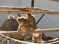 NASU Monkey Park