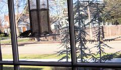 Birds (boisebluebird) Tags: boise michaeltoolson boisebluebirdcom httpwwwboisebluebirdcom boiselandscaping boisegardener