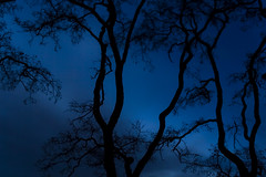 Branches (Billy Wilson Photography) Tags: wood longexposure morning blue sky ontario canada nature silhouette clouds digital canon dark landscape eos rebel lowlight bravo branch tripod silhouettes atmosphere bluehour xs soo northern saultstemarie northernontario algoma billywilson