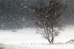 Snowing in The Hoge Veluwe (!.Keesssss.!) Tags: snow tree nature netherlands weather horizontal outdoors photography frozen nationalpark day nopeople snowing gettyimages tranquilscene royaltyfree beautyinnature coldtemperature theflickrcollection keessmans 0106ksgetty